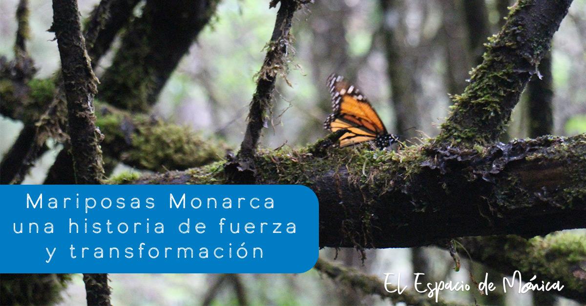 mariposas monarca pnl fuerza